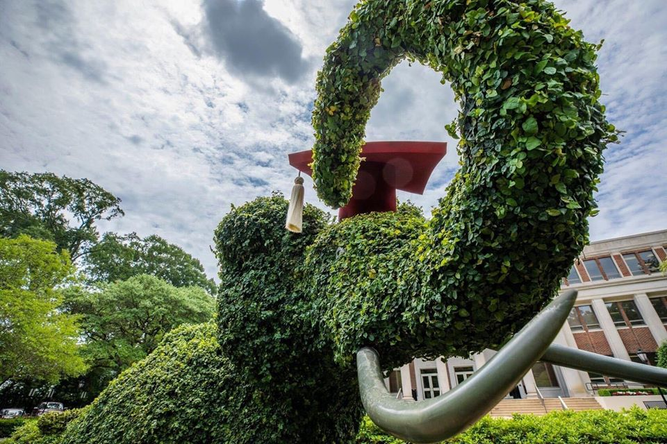 Facebook photo of elephant topiary with a grad cap on.