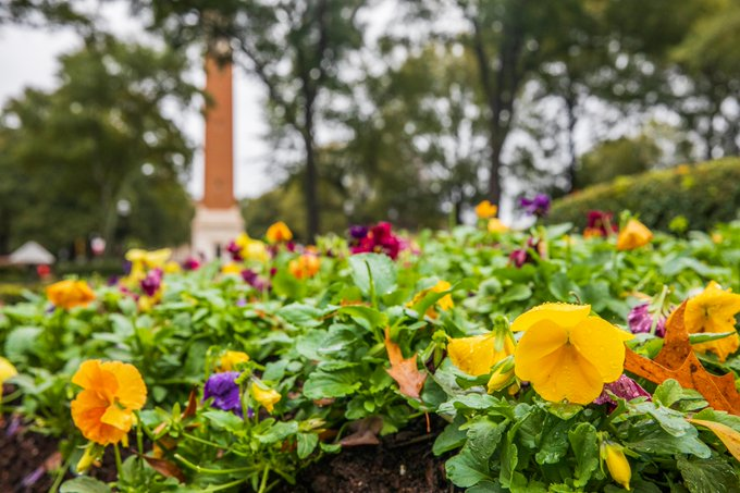 Twitter photo of denny chimes and some flowers.